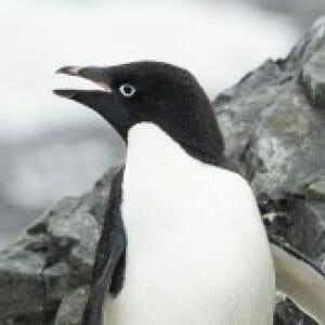 Profile photo of Andrew